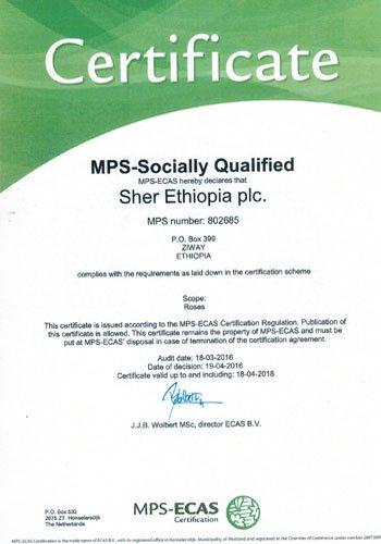 Zertifikate, Zertifikate