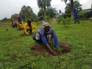 , 300.000 trees planted by Afriflora in collaboration with partners