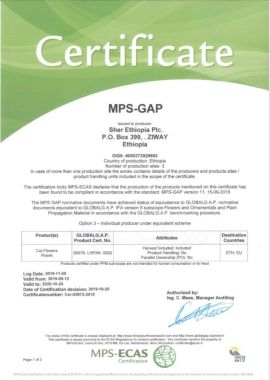 MPS-GAP / global GAP / Grasp